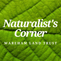 Naturalist's Corner – Blueberries!