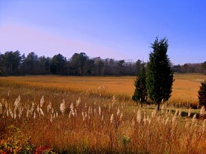 landscape 1_opt