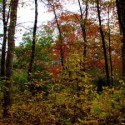 10/13/18 Fall Foliage Tree Walk